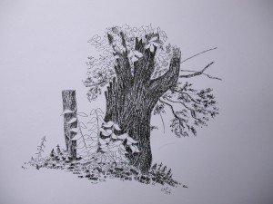 stylo plume : vieux tronc dans paysage DSCN5006-300x225