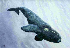 aquarelle : baleine dans animalier baleine-300x205