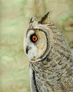aquarelle : hibou dans animalier hibou-237x300