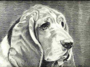 crayon graphite : vieux chien dans animalier vieux-chien-300x226