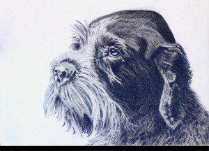 crayon graphite : chien dans animalier crayon-graphite-chien-3-300x216