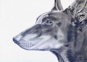 crayon graphite : chien dans animalier crayon-graphite-chien-300x213