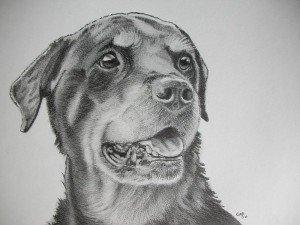 crayon graphite : chien 2 dans animalier crayon-graphite-chien1-300x225