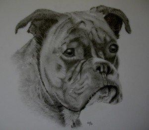 crayon graphite : babines dans animalier babines-300x262