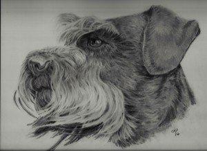 crayon graphite : schnauzer dans animalier schnauzer-300x218