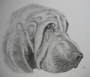 CRAYON GRAPHITE : BLOODHOUND dans animalier bloodhound-300x259