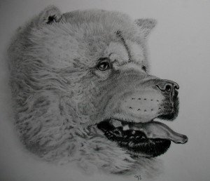 CRAYON GRAPHITE : CHOW-CHOW dans animalier chow-chow-300x258