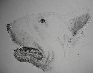 CRAYON GRAPHITE : BULL TERRIER dans animalier bull-terrier-300x236