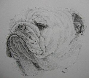 CRAYON GRAPHITE : BULLDOG dans animalier crayon-graphite-bulldog-300x263