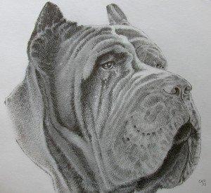 CRAYON GRAPHITE : DOGUE DE BORDEAUX dans animalier crayon-graphite-dogue-de-bordeaux-300x275