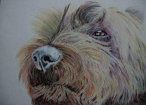 CRAYON DE COULEUR : MAX dans animalier crayon-de-couleur-cairn-300x217