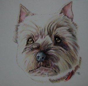 CRAYON DE COULEUR : MAX BIS dans animalier crayon-de-couleur-cairn-terrier-300x292