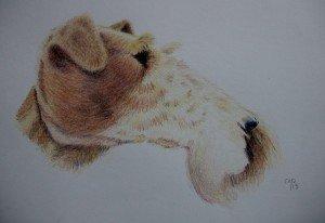 CRAYON DE COULEUR : FOX TERRIER dans animalier crayon-de-couleur-fox-terrier-300x206