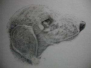 CRAYON GRAPHITE : BEDLINGTON TERRIER dans animalier crayon-graphite-bedlington-terrier-300x225