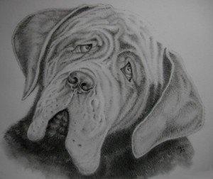 CRAYON GRAPHITE : REGARD TRISTE dans animalier crayon-graphite-chien1-300x252