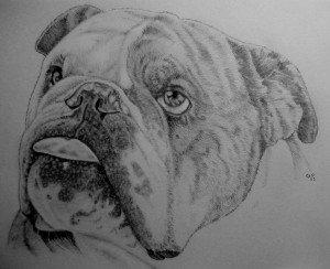 CRAYON RAPHITE : CLYDE dans animalier crayon-graphite-chien-300x244