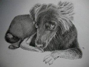 crayon graphite chien