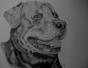 dessin graphite chien roth