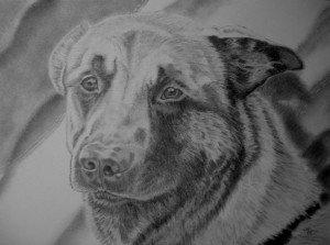 crayon graphite chien diesel